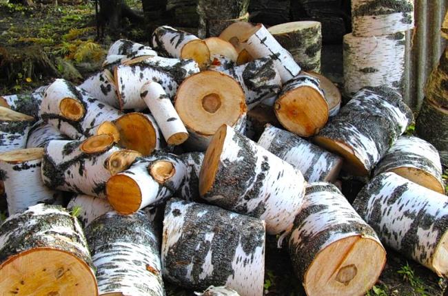 Свежераспиленный березовый лес