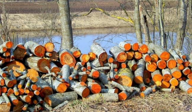 Заготовка ольховых дров
